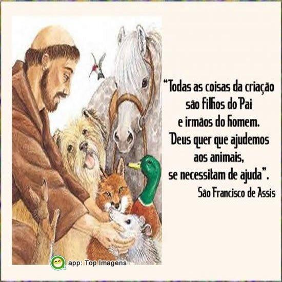 Deus quer que ajudemos aos animais