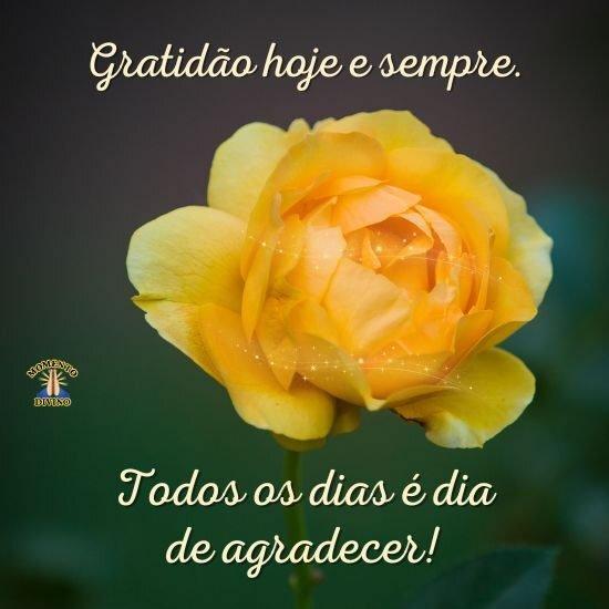 Gratidão hoje e sempre