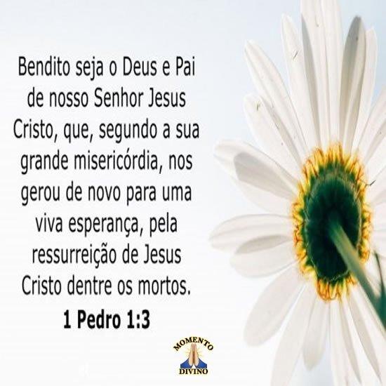 Pedro 1.3